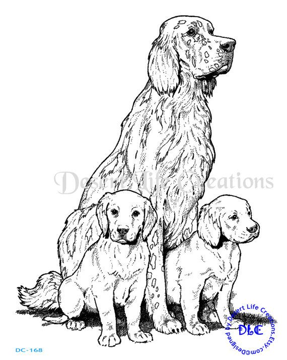 570x713 Irish Setter Inch Illustration