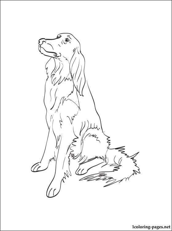 560x750 Irish Setter Coloring Page Coloring Pages
