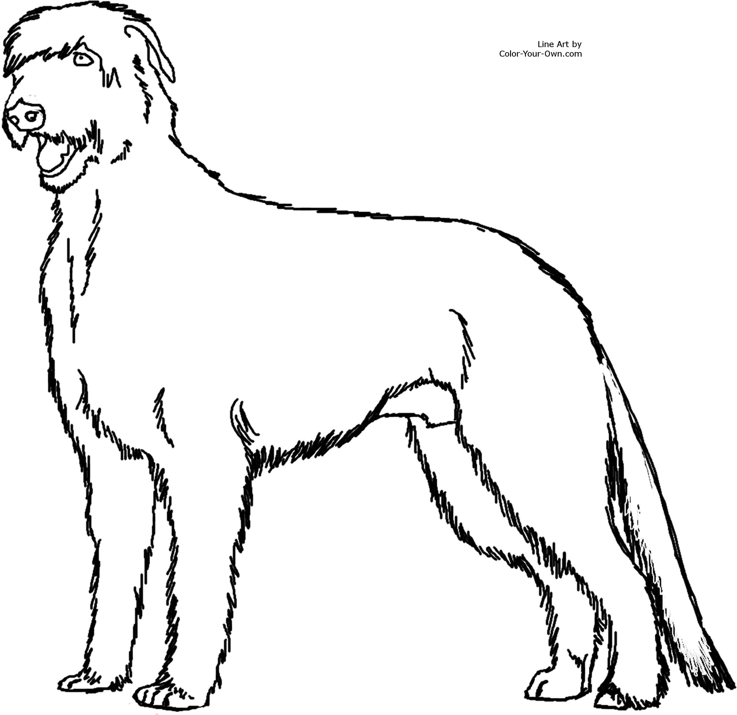 2475x2400 Irish Wolfhound Standing Dog Coloring Page