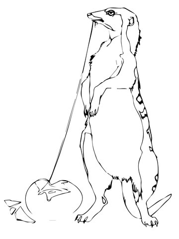 360x480 Yellow Mongoose Coloring Page
