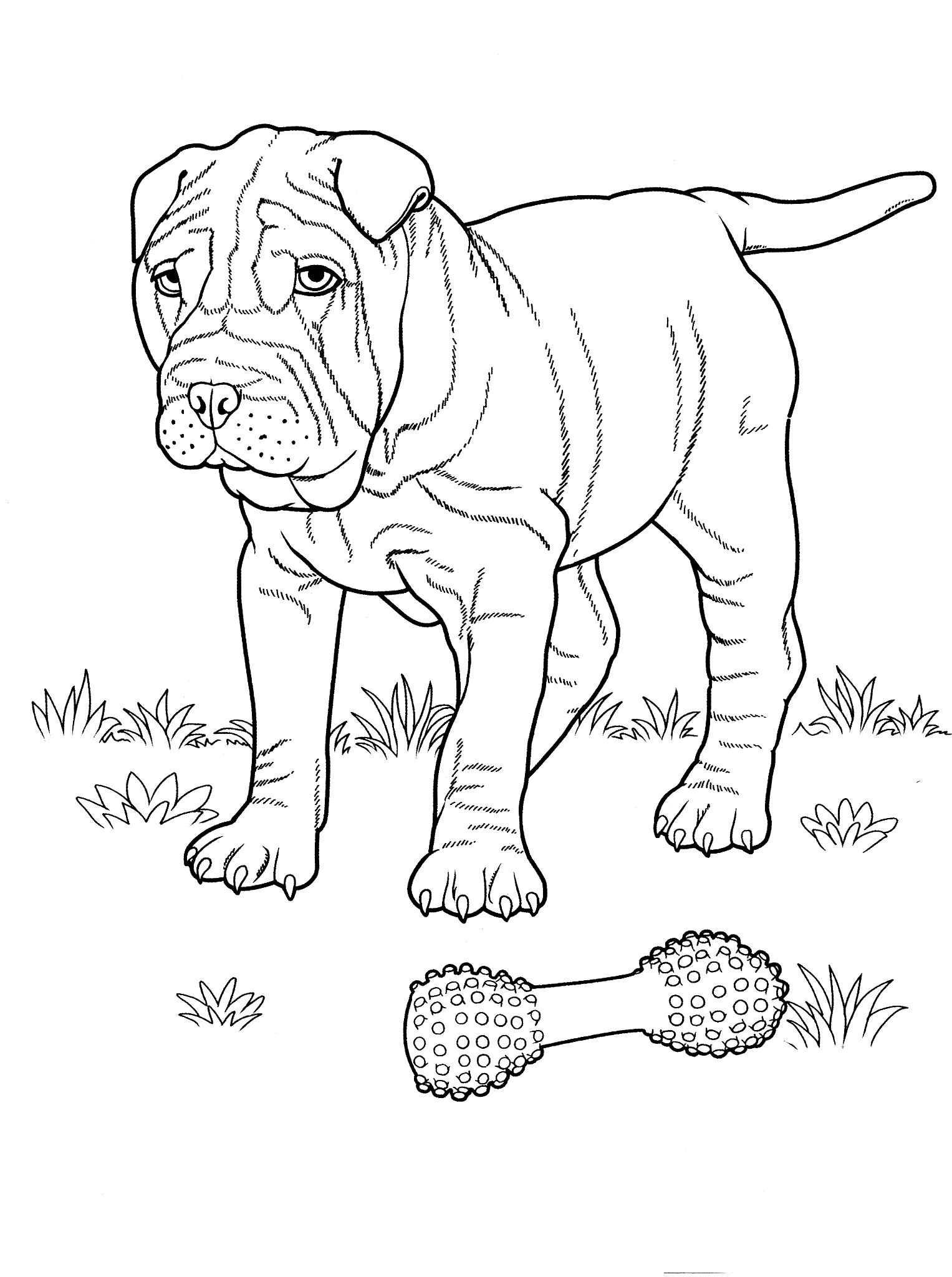 1527x2048 Dog Coloring Pages Teenagers Coloring Pages Coloring Pages