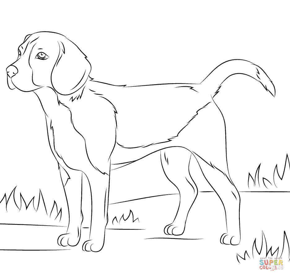 936x895 Beagle Dog Coloring Page Free Printable Coloring Pages