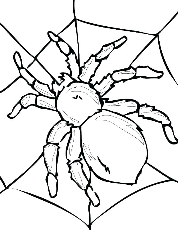 600x777 Spider Color Page Spider Web Coloring Spider Color Pages Iron