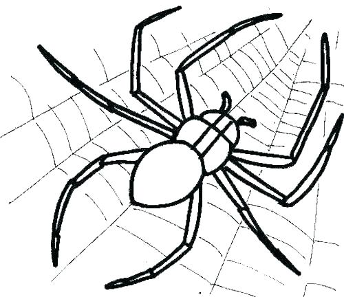 500x432 Ewok Coloring Pages Spider Coloring Pages Spider Coloring Book