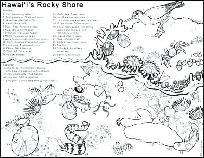 400x310 Island Coloring Page Pics Tropical Island Coloring Page A Free