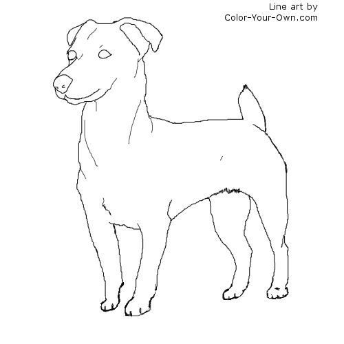 The Best Free Jack Russell Coloring Page Images Download From 979