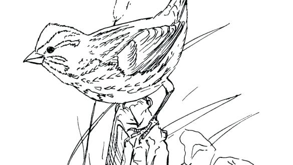 585x329 Sparrow Coloring Page Chipping Sparrow Coloring Page Disney