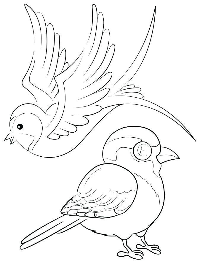 675x900 Sparrow Coloring Pages Free Printable Sparrow Coloring Page