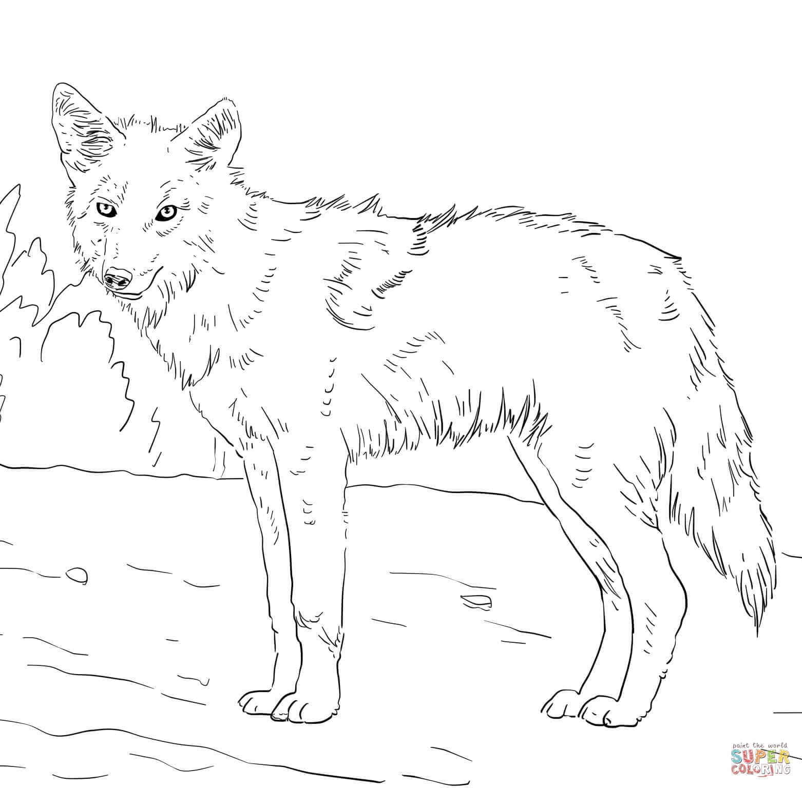 1562x1536 Coyote Coloring Pages Coyote Coloring Pages American Jackal Coyote