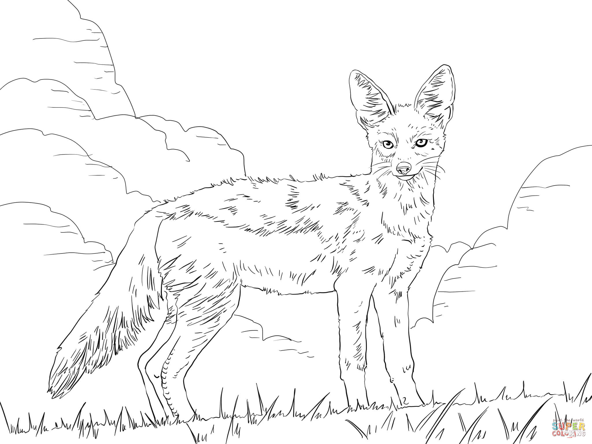 2048x1536 How To Draw Jackal Side Striped Jackal Coloring Page Free