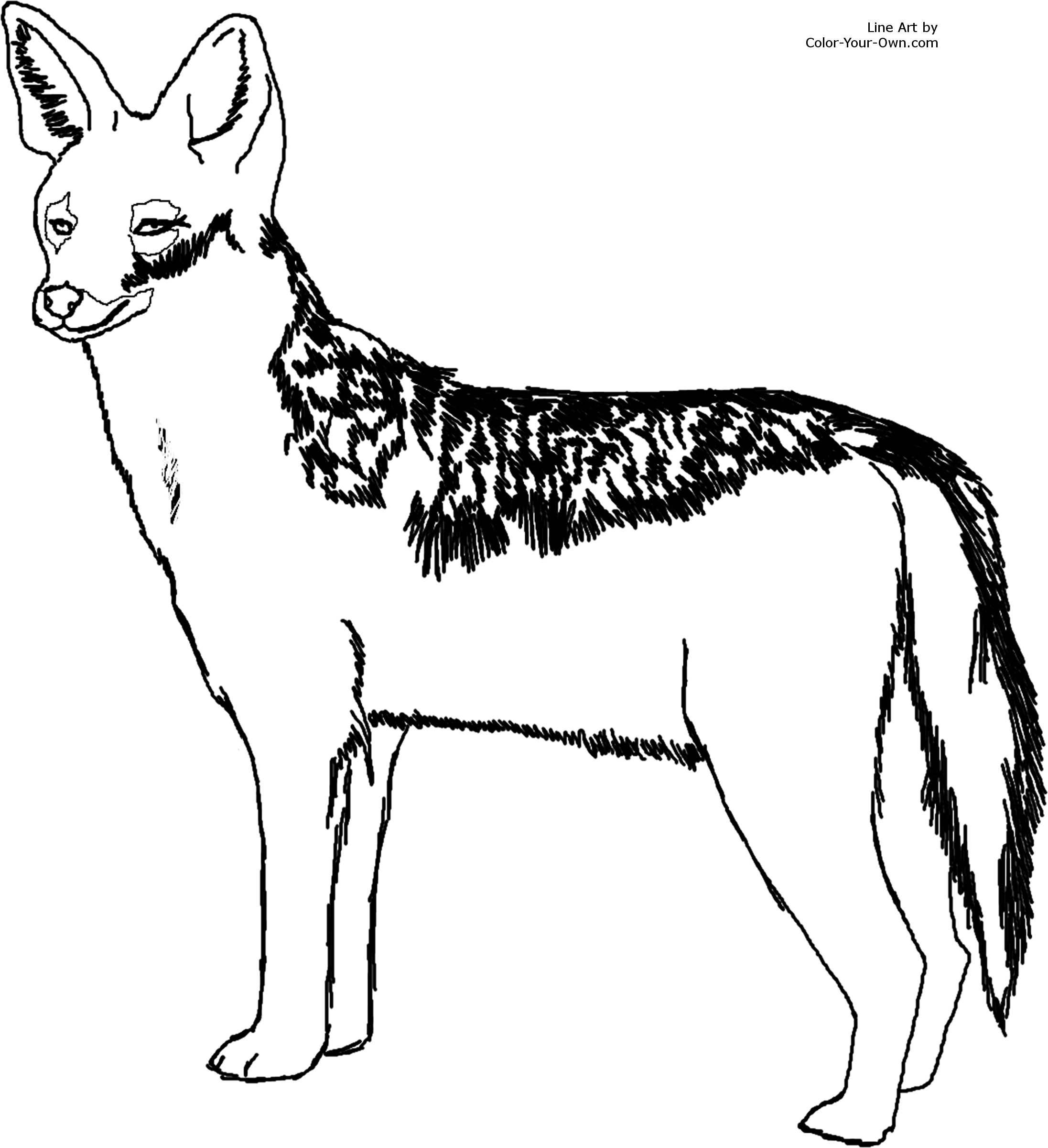 2193x2400 Black Backed Jackal Coloring Page