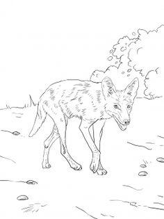 236x315 Coyote