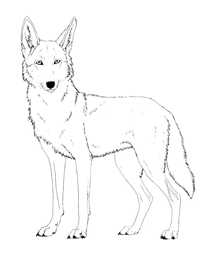 689x867 Wile E Coyote Coloring Pages Jackal For Kids Preschool