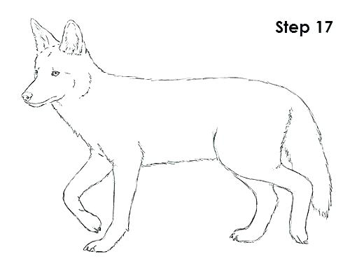 500x386 Coyote Coloring Coyote Coloring Page Coyote Coloring Coloring Page