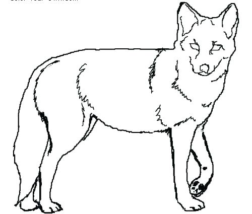 500x425 Coyote Coloring Page Top Coyote Coloring Page Image Wolf Jackal