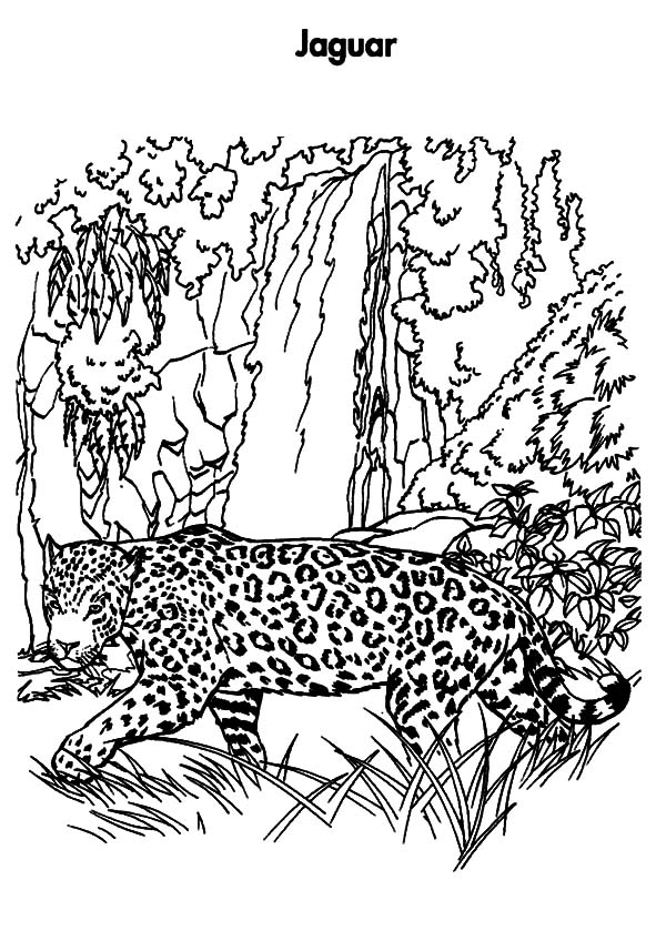 600x839 Jacksonville Jaguars Coloring Pages