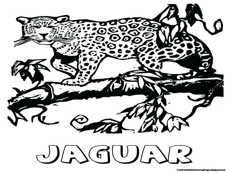 736x552 Jaguar Coloring Page Jaguar Coloring Sheet Jaguar Animal Coloring