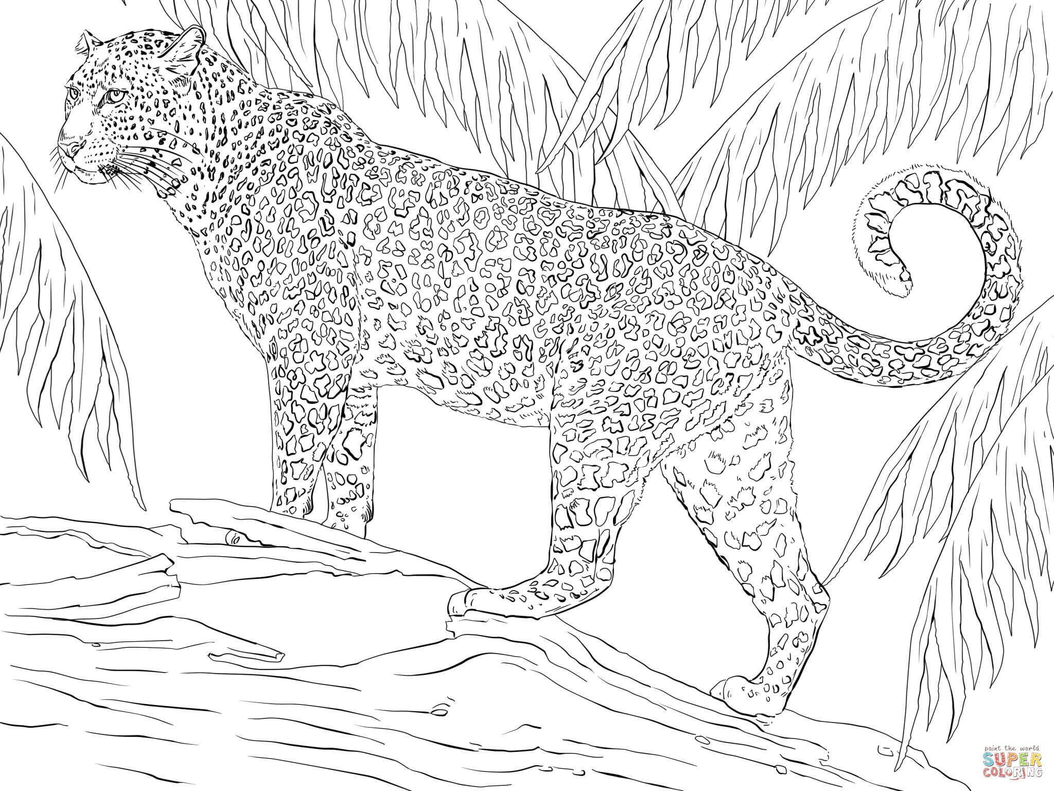 2048x1536 Jaguar Coloring Pages