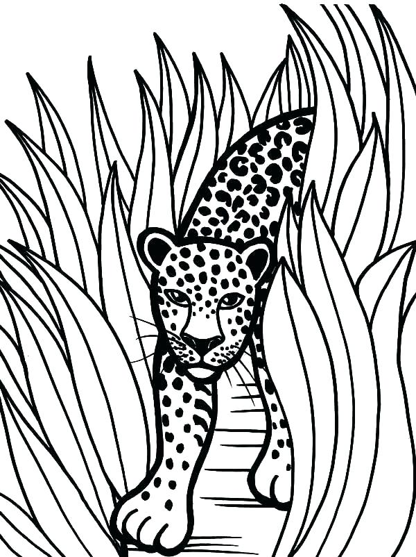 600x802 Jaguar Coloring Pages Baby Jaguar Coloring Pages And Image Go G
