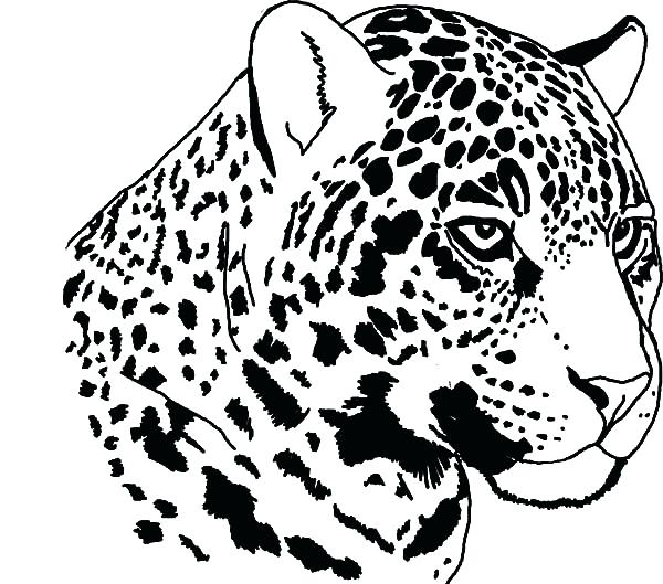 600x529 Jaguar Coloring Pages Good Jaguar Coloring Pages On Coloring Pages