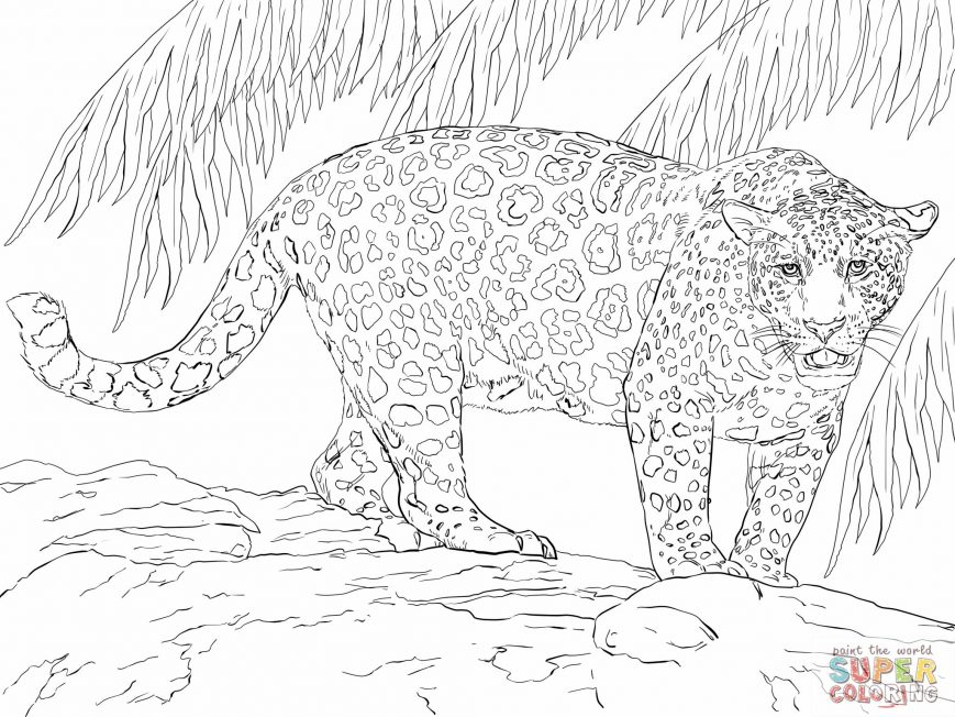 869x652 Jaguar Coloring Pages Image High Def Easy Car Colouring To Print