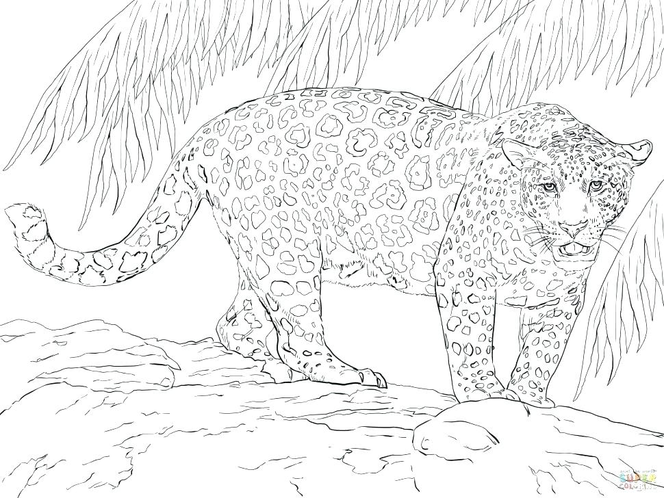 970x728 Minimalist Jaguar Coloring Pages Crayola Photo Black Jaguar