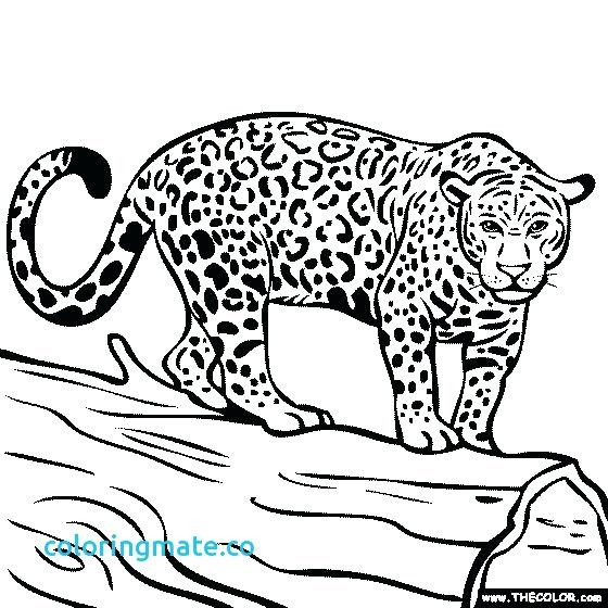 560x560 Jacksonville Jaguar Coloring Pages Jaguar Coloring Pages Jaguar