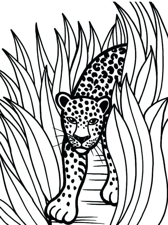 jaguar coloring pages 4