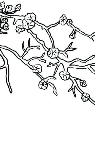320x480 Cherry Blossom Coloring Pages Download Free Printable Coloring