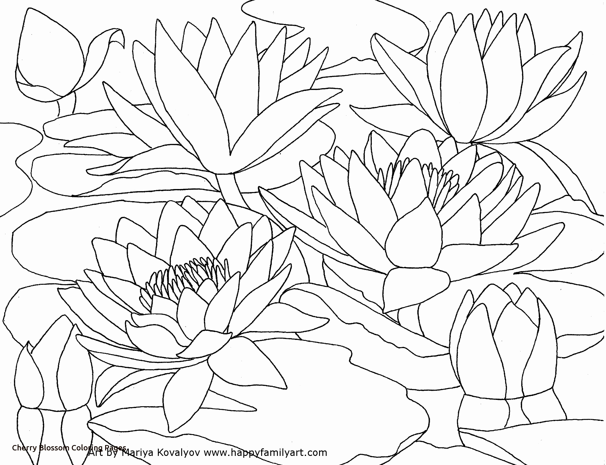 2000x1535 Japanese Cherry Blossom Coloring Pages Stock Color The Flowers