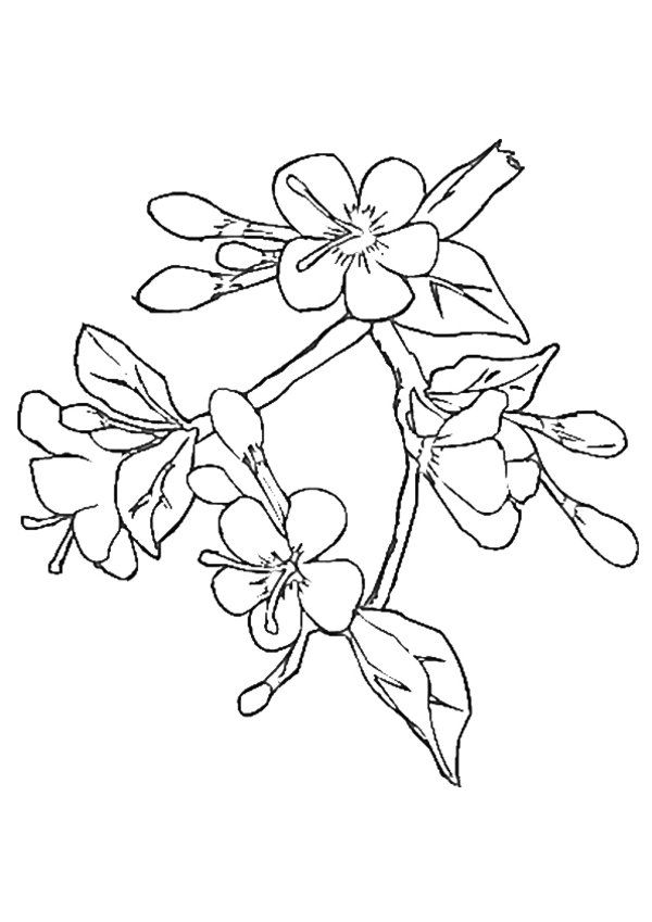 600x849 Cherry Blossom Coloring Page