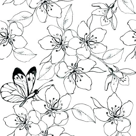 450x450 Cherry Blossom Coloring Pages Cherry Blossom Colouring Sheets