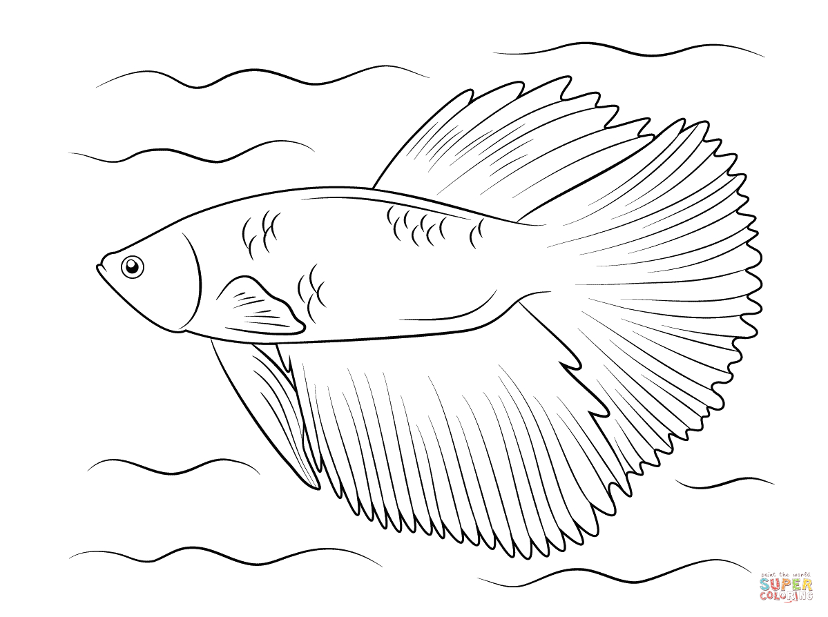 1199x894 Unique Siamese Fighting Fish Coloring Pages Japanese The Aquarium