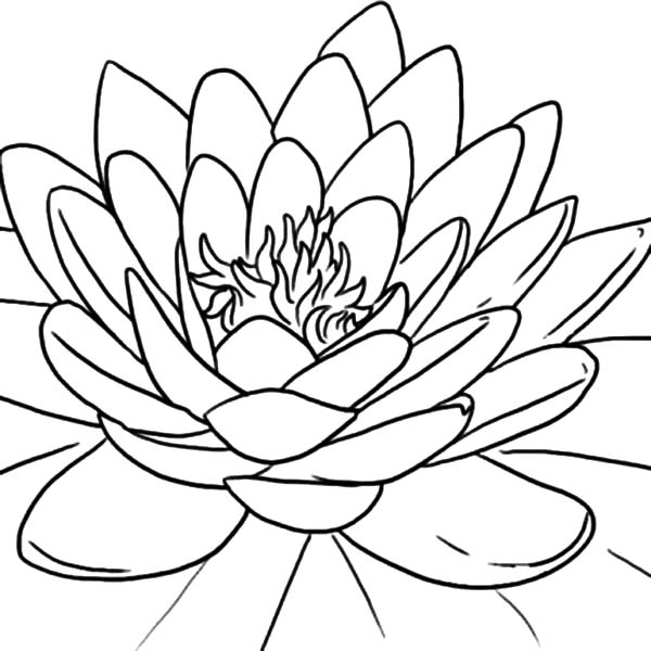600x600 Blooming Lotus Flower Coloring Pages Batch Coloring