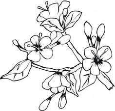 236x226 Cherry Blossoms Coloring Page