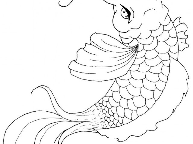 640x480 Japanese Koi Fish Coloring Pages Blooming Lotus And Coy Fish