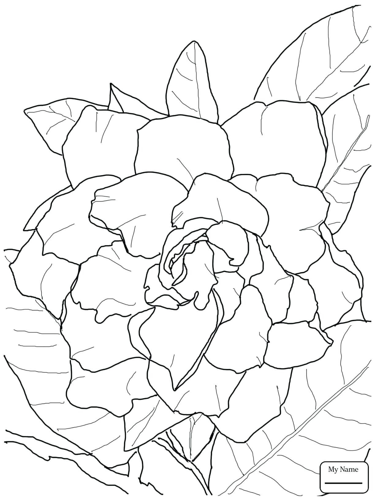 Jasmine Flower Coloring Pages