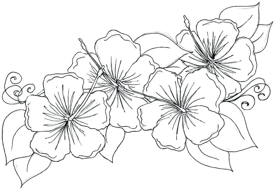 948x656 Hibiscus Flower Coloring Pages Free Hibiscus Flower Coloring Pages