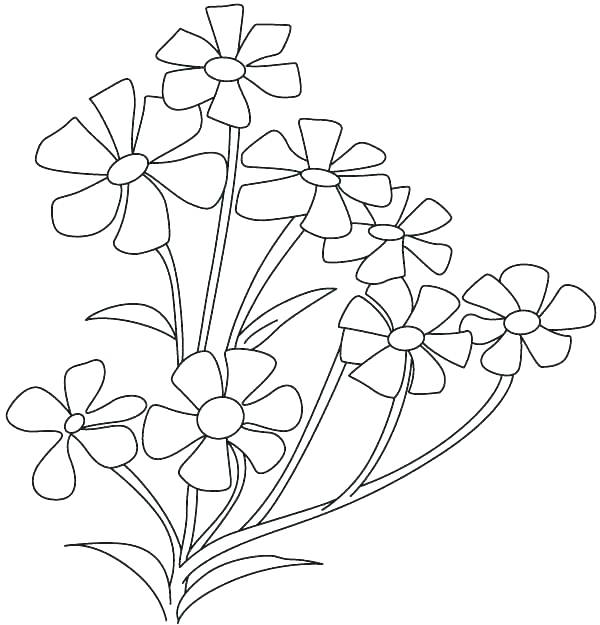 600x625 Jasmine Flower Coloring Pages Appealing Flower Color Pages Flowers