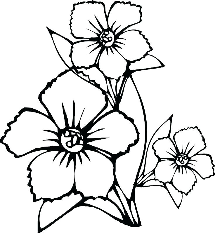 736x798 Jasmine Flower Coloring Pages Easy Flower Coloring Pages Jasmine