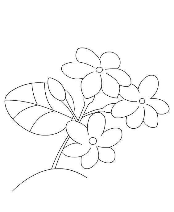 564x687 Jasmine Flower Coloring Pages Lovely Jasmine Flower Coloring Pages