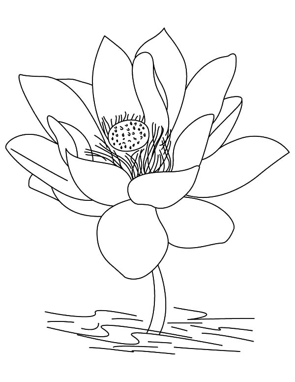 600x776 Jasmine Flower Coloring Pages Jasmine Holding Lotus Flower