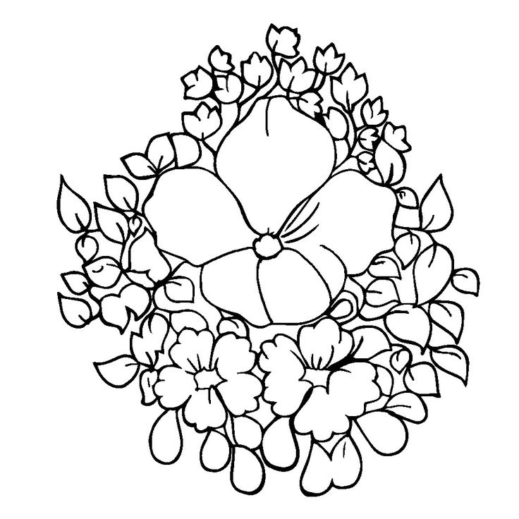 736x736 Jasmine Flower Colouring Pages