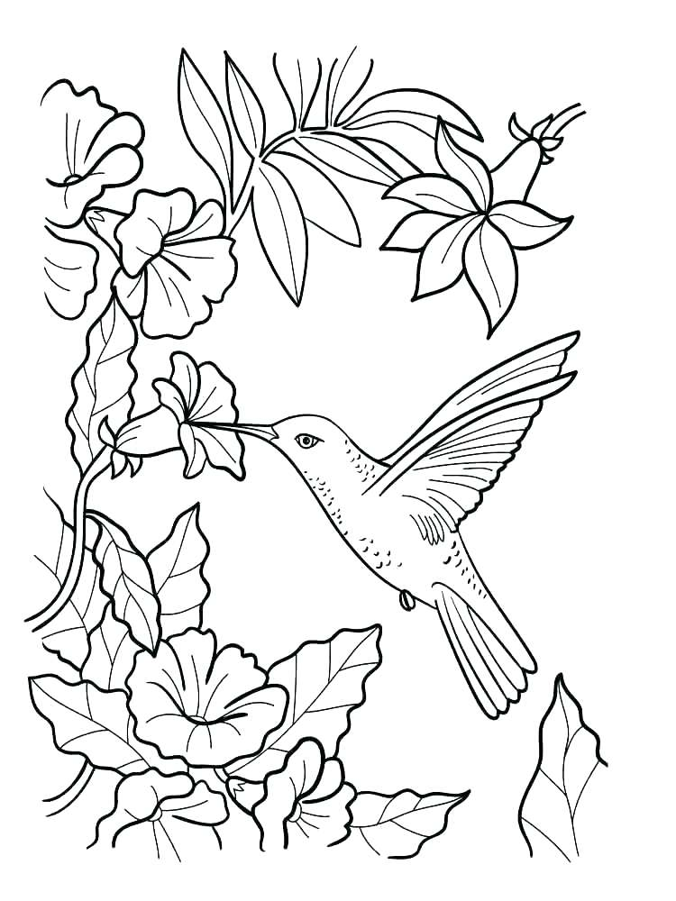 750x1000 Jasmine Flower Pictures Color Flower Garden Coloring Pages Flower