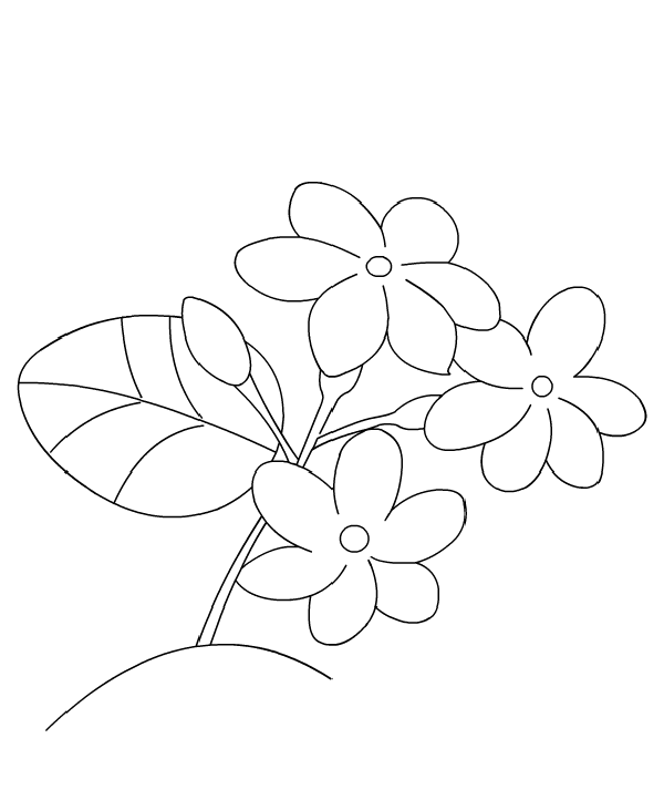 600x731 Jasmine Flower Coloring Pages Coloring Kids Flower