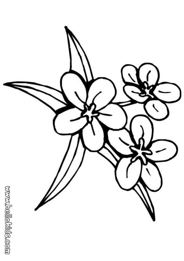 601x850 Jasmine Flower Coloring Pages Flower Coloring Page Adult Coloring
