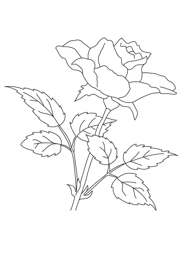 595x842 Flowers Coloring Pages Free Printable Great Jasmine Flower