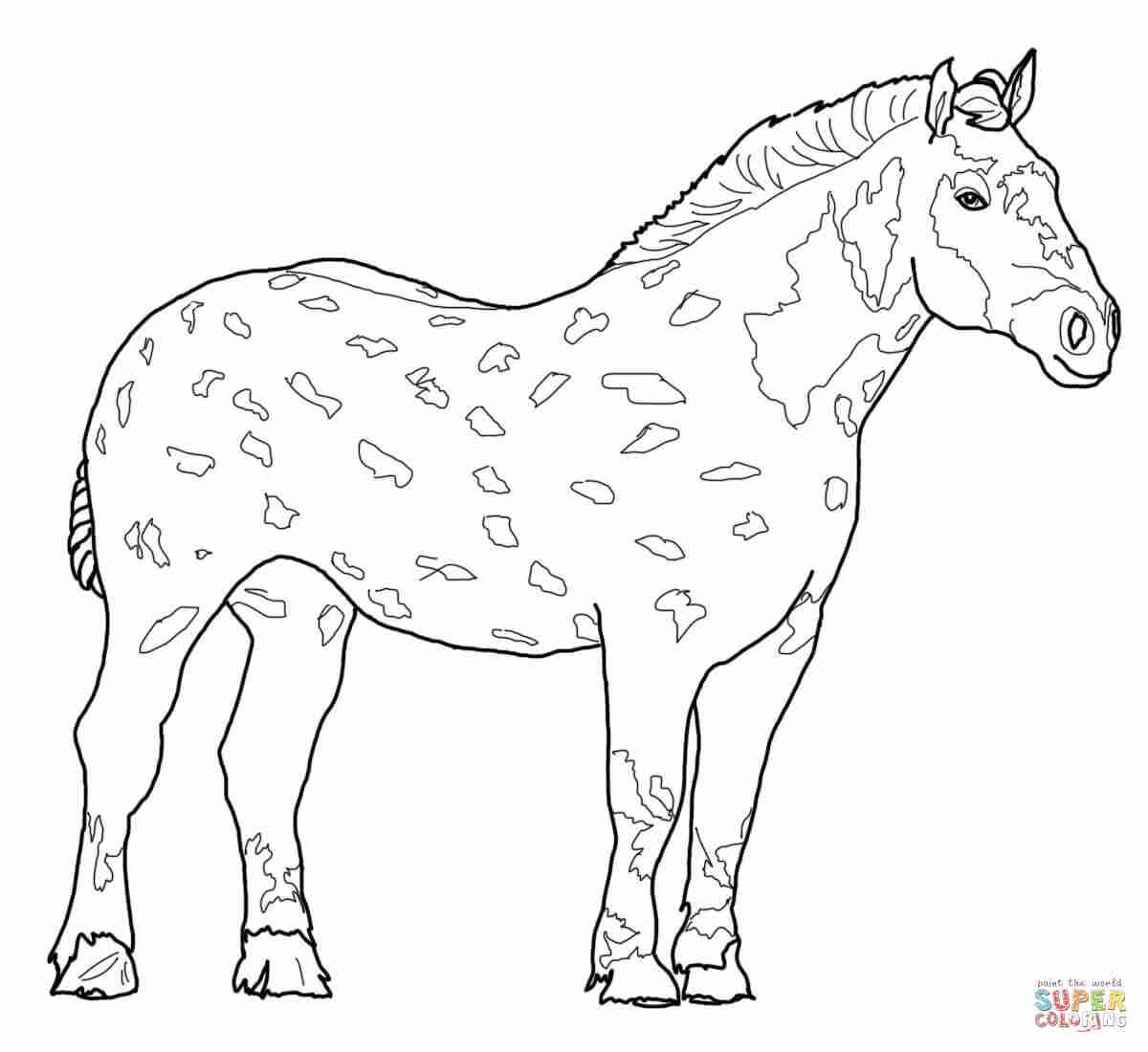 1200x1100 Running Arabian Horse Coloring Page Free Printable Pages Beauteous