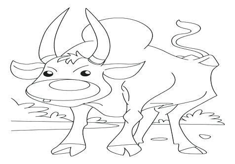 476x333 Ox Coloring Page