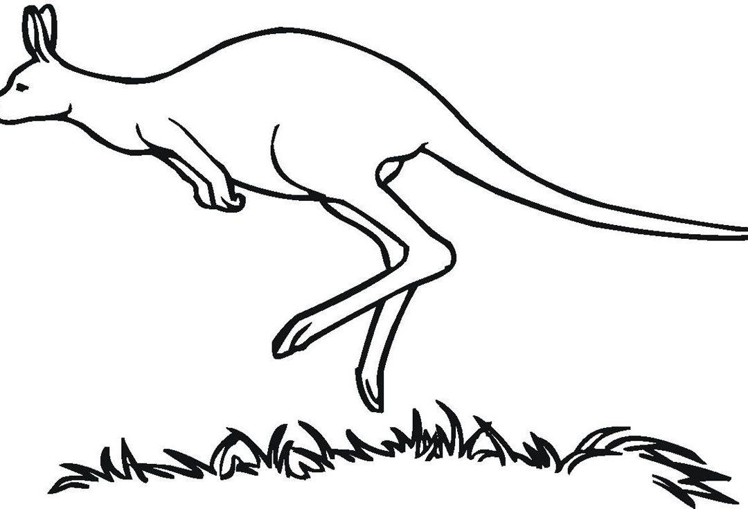 1080x735 Free Printable Kangaroo Coloring Pages For Kids New Page Glum